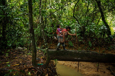 A Cocalera (coca leaf farmer), carrying her son on her back, walks over a felled tree trunk to cross a gully on a trail that gives access to her coca plantation in rural Chimore, in the Chapare region...