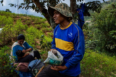 Elton Antonio Moran, a coca farmer (cocalero), chews coca leaves while working in his coca plantation in rural Huancane, in the Yungas region.  Former President and former coca farmer Evo Morales, for...