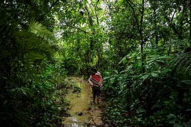 A Cocalera (coca leaf farmer), carrying her son on her back, walks on a trail that gives access to her coca plantation in rural Chimore, in the Chapare region. This is the main area where coca is used...