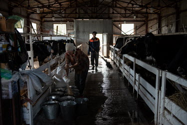 Tatiana milking cows on Mikhail Utrobin's dairy farm. A former top manager at a large chain of sport shops in the Far Eastern district, who did not know anything about farming but had a dream to feed...