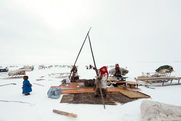 Nenets women Lyuba and Lyuda place the first of around 30 - 40 supporting poles that are used in total as they erect a tent ('chum'). There is a strict segregation of duties in a daily life of nomadic...