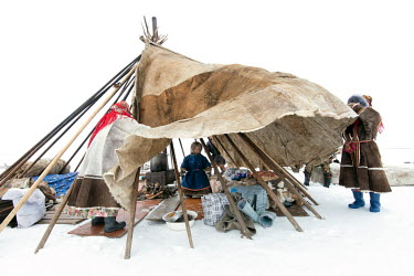 Nenet child Gosha stands inside a part erected tent ('chum') after their arrival at a new campsite following a long journey. There is a strict segregation of duties in a daily life of nomadic Nenets....