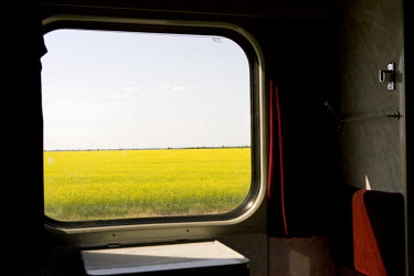 A filed of rape flowers seen through the window of a train near Simferopol in the Autonomous Republic of Crimea prior to Russian annexation in 2014.