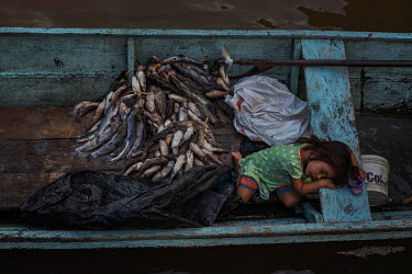 A Tikuna (Ticuna) girl sleeps in a canoe beside a pile of catfish in the port of Tabatinga while her father sells fish at the local market. The city on the banks of the Solimoes River, on the triple b...