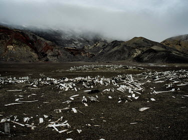 The remains of wooden boats lie along the shore of Whalers Bay, Deception Island in the South Shetland Islands. Nearby are the remains of a whaling station built by Norweigans in the early 20th centur...