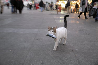 A cat carries a fish stolen from a fishmonger in the Egyptian Bazaar in the Eminonu area.