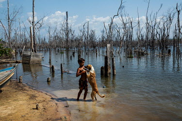 A boy plays with a dog on the banks of the Xingu River in Paratizao, a river dweller community located near the dam of Belo Monte. The place is surrounded by great toothpick-like patches of dead trees...