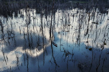 A boy fishes on the Xingu River near to Paratizao, a river dwellers' community located near the dam of Belo Monte. The place is surrounded by great toothpick-like patches of dead trees, formed after t...
