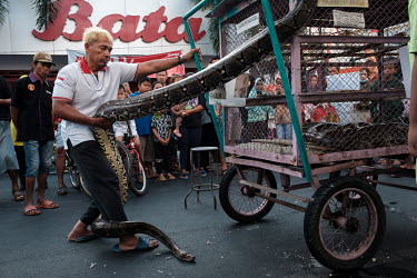 Abdul Kafid coaxing a reticulated python down from the roof of its mobile enclosure as a crowd watches on 'Car-Free Day' in Kediri. In a number of Indonesian cities certain streets are closed to motor...