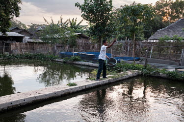 Village leader, Sholihudin, feeding gouramis on his fish farm in the hamlet of Gendis on the outskirts of Kedir. The majority of the area's residents are farmers, and are particularly susceptible to s...