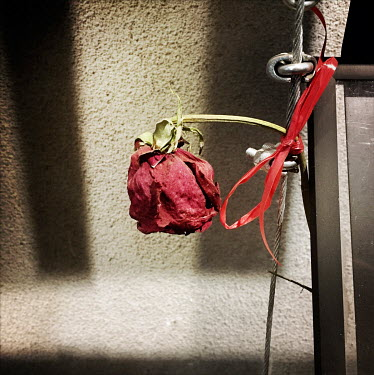 A red rose left beside a photograph that is part of an exhibition at the national stadium (Estadio Nacional), which is now a memorial to political prisoners and disappeared victims of the Pinochet dic...