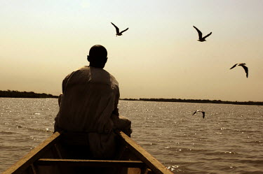 Sitting at the prow of his pirogue, a fisherman heads to a fishing spot, while seabirds fly around the boat looking for food.