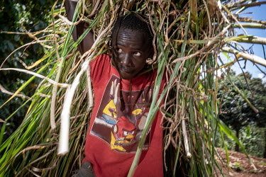Duncan Maina (13) working in the fields of the village chief for two Euros a day. He gives one Euro to his mother, the saves the other Euro so he can buy rabbits. He would like to go back to school wh...