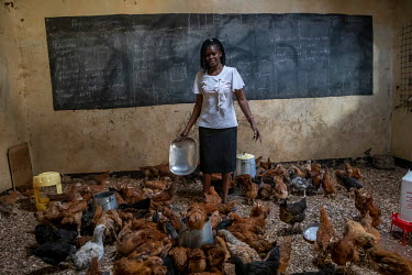 A woamn feeds chickens in an empty classroom being used as a barn while the school is closed due to the coronavirus pandemic.