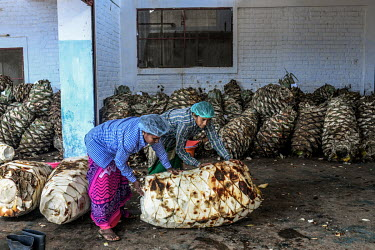 Workers roll agave plants onto scales to be weighed at the Agave India factory, a craft distillery.