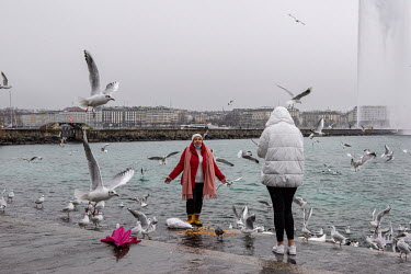 Two women feeding the seagulls and taking photographs beside Lake Geneva.