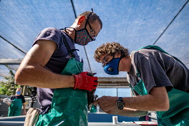 Dr Francois Lampen and a colleague take a blood sample from a sick Cape cormorant chick at SANCCOB (Southern African Foundation for the Conservation of Coastal Birds) seabird hospital. The bird was re...