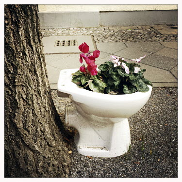 Flowers planted in a former toilet on the street in Tiergarten.