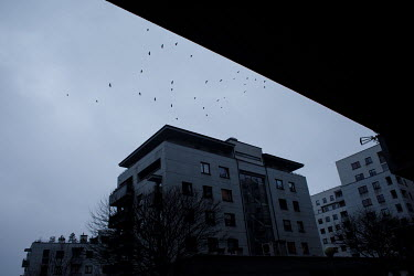 Birds flying over a highrise housing estate.