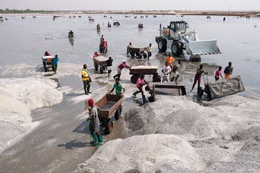 Labourers harvesting salt from a pan at Electrochem Ghana Limited's facility in the Songor Lagoon. Until late 2020 the factory was Ada Songor Salt, a government-run concern. Commercial operations in t...