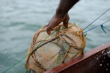 Vincent Oletey, sets a fish trap while working as boat crew on Lake Volta.  Vincent (14) and Noah (12) spend up to six nights a week working on fishing canoes on Lake Volta. Rising at 03:00am, they...