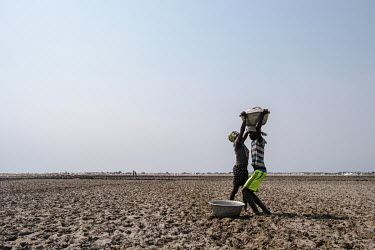 Labourers carry basins of salt from the heaps stockpiled in the distance in relays across the mudflats of the 'Yomo', the area traditionally held to be the spiritual heart of the salt-rich Songor Lago...