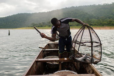 Vincent Oletey stunning a fish with a club before removing it from a trap during a fishing voyage on Lake Volta.  Boat crew Vincent (14) and his brother Noah Oletey (12) spend up to six nights a week...