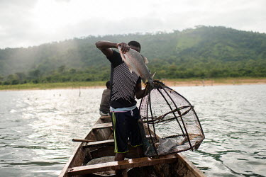 Vincent Oletey removes a fish from a trap during a fishing voyage on Lake Volta.  Boat crew Vincent (14) and his brother Noah Oletey (12) spend up to six nights a week working on fishing canoes on Lak...
