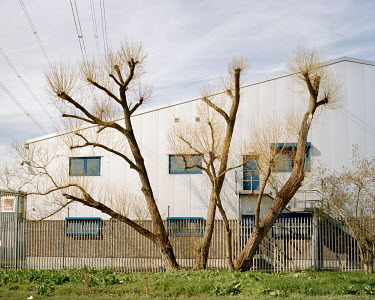 Willow trees on the edge of an industrial estate in Rainham.