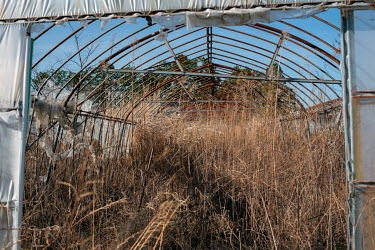 A greenhouse abandoned since March 2011.  The entire population of Futaba was evacuated en masse after the Fukushima Daiichi nuclear disaster. Since 2013, only 4% of the town has been open to visitors...