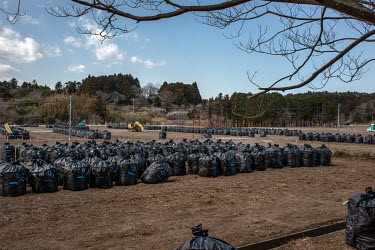 Plastic bags containing contaminated waste stored in a paddy field.   The entire population of Futaba was evacuated en masse after the Fukushima Daiichi nuclear disaster. Since 2013, only 4% of the to...