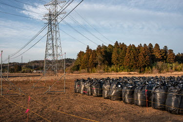 Plastic bags containing contaminated waste stored in a field.   Okuma was totally evacuated in the aftermath of the Fukushima Daiichi nuclear disaster, the nuclear plant is just four Kilometres away....