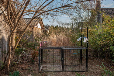 A trap for wild boar near houses abandoned since March 2011 due to elevated radiation levels.  The entire population of Futaba was evacuated en masse after the Fukushima Daiichi nuclear disaster. Sinc...