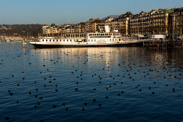 Water birds surround the old lake steamer 'Geneve', currently used as a place of refuge for disadvantaged people, including the homeless. It is permamently moored by the central Eaux-Vives district.
