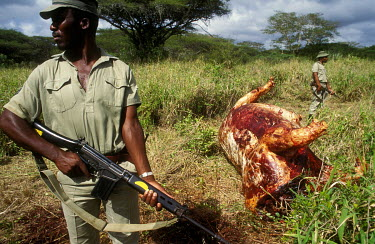 Park rangers check for bullet casings near the carcass of a poached Rhino in the Mkuzi Game Reserve.