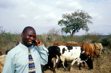 Kenny Maziya makes a call with his mobile phone as cattle graze beside him.