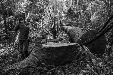 A legal logging crew take a rest after cutting down a pequi tree in the Jamari National Forest. The lack of monitoring by environmental agencies and consequent ease of illegal logging, even in protect...
