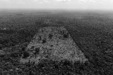 An area deforested by land grabbers in the Trincheira Bacaja Indigenous Land. President Bolsonaro's speeches denigrating indigenous populations acted as a stimulus for invaders of indigenous lands. In...