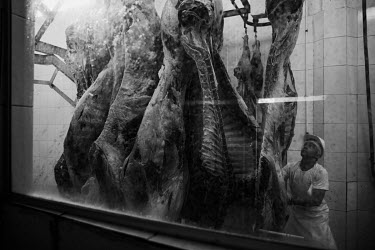 An employee weighing cattle carcasses in the Frigo Verde refrigerator.