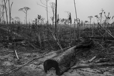 Recent deforestation in the municipality of Apui, along the Trans-Amazonian highway in the south of Amazonas State. Apui is on the front line of agricultural expansion in the Amazon, the seventh most...
