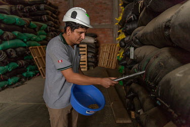 A Norandino Cooperative worker takes a sample of beans from sacks of coffee in a warehouse.