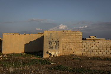 A stray dog wanders past a faded ISIS flag painted on a wall in the now abandoned Yazidi village of Kocho which still lies in ruins more than four years after it was liberated from ISIS rule.
