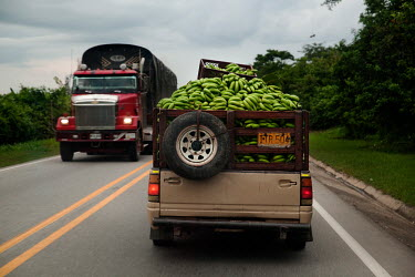 A truck loaded with lose bananas is driven along a road near Rio Frio.