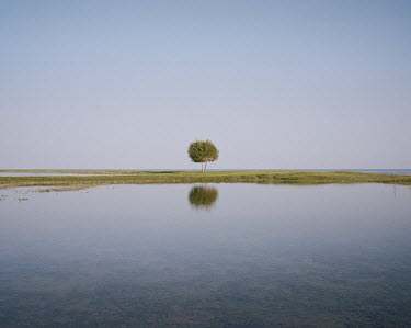 A solitary tree on the shores of Lake Issyk-Kul, the world's second largest mountain lake. Cholpon-Ata, host city of the World Nomad Games, is situated on the northen shore of Lake Issyk-Kul.