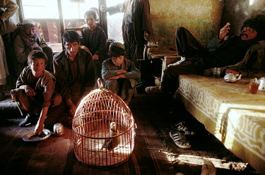 Men gathered around a caged bird in a 'chai-khana' tea room.