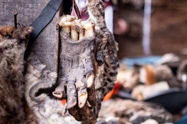 A dried monkey's paw and other wild animals products for sale in a traditional medicine voodoo, or vodun, stall in Kejetia market (Kumasi Central Market). The traditional medicine industry is among th...