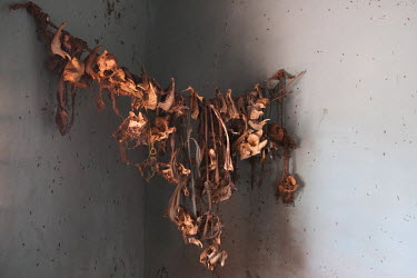 Bones of sacrificed animals at the home of Kakpo Somonnin, a diviner, at his home in the village of Koko.