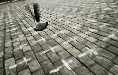 A pigeon flies in the Old Town Square, where 25,000 crosses have been painted on the cobbles, one for each person who has died from COVID-19. The crosses were painted by the group a Million Moments fo...