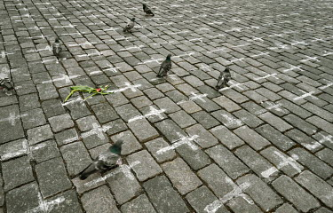 Pigeons in the Old Town Square, where 25,000 crosses have been painted on the cobbles, one for each person who has died from COVID-19. The crosses were painted by the group a Million Moments for Democ...