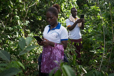 Fabienne Boton (30) using an Android tablet and mobile app to record plant biodiversity in a small sacred forest grove near the village of Dekanme along the Oueme River.  What was once a forest has dw...